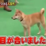 ホンマでっかTV 犬特集….植木先生は犬が…? 幸せホルモンと犬?